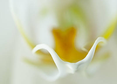 Moth Orchid Macro Poster