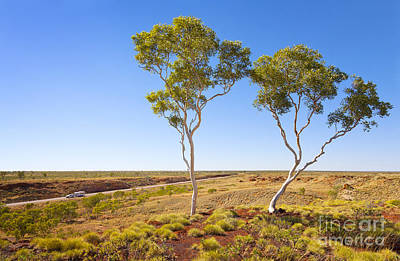 Outback Australia Ghost Gums Poster by Colin and Linda McKie