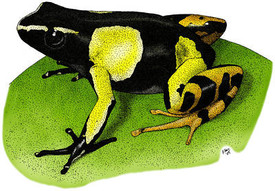 Painted Mantella Frog Poster