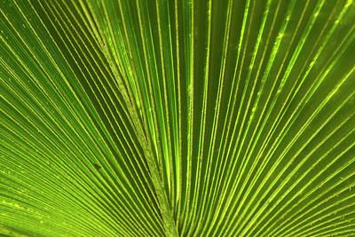 Palm Frond, Nadi, Viti Levu, Fiji Poster by David Wall