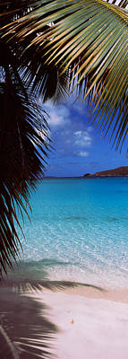 Palm Tree On The Beach, Maho Bay Poster by Panoramic Images