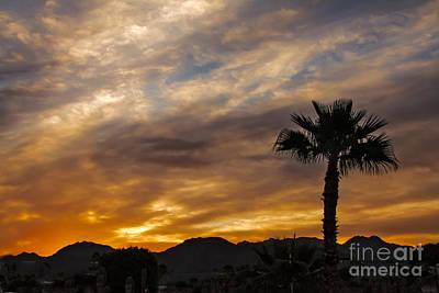 Palm Tree Silhouette Poster by Robert Bales