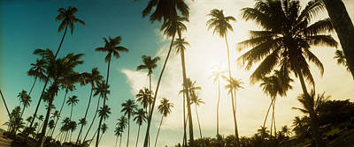 Palm Trees Along The Beach In Morro De Poster