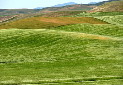 Palouse Patchwork 6 Poster by Anne Mott