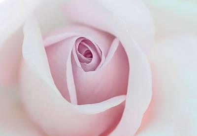 Pastel Pink Rose Flower Poster by Jennie Marie Schell
