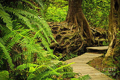Path In Temperate Rainforest Poster by Elena Elisseeva