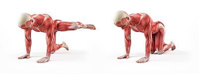 Person Exercising Poster by Sebastian Kaulitzki