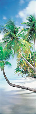 Pigeon Point Tobago Poster by Panoramic Images