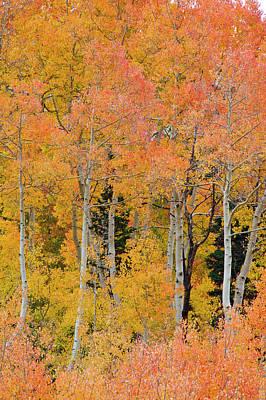 Pine Trees Among Yellow, Orange Poster