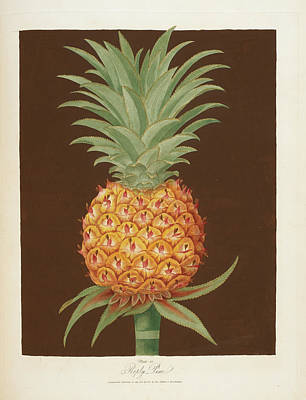 Pineapple Poster by British Library