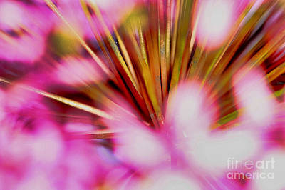 Poster featuring the photograph Pink Alium by Rebeka Dove