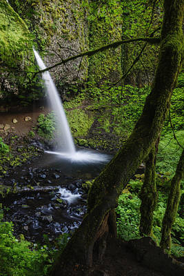 Ponytail Falls Through The Trees Poster by Vishwanath Bhat