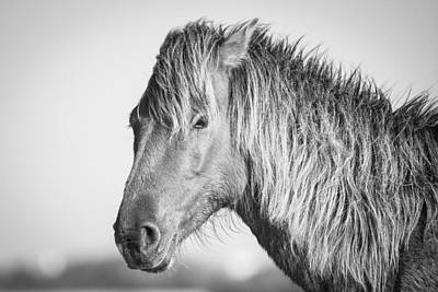 Portrait Of A Wild Horse Poster