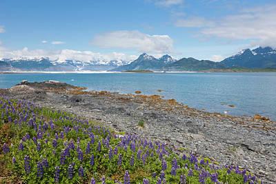 Prince William Sound, Alaska, Lupine Poster by Hugh Rose