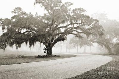 Proud Oak In The Fog Poster by Scott Pellegrin