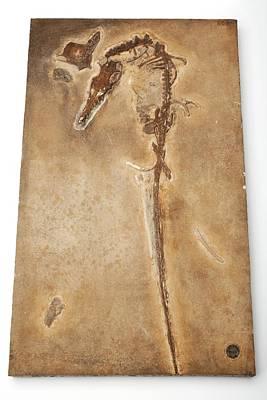 Pterosaur Fossil Poster