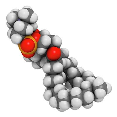 Pulmonary Surfactant Molecule Poster by Molekuul