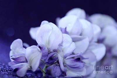 Pure Purple Poster by Krissy Katsimbras