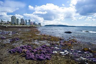 Purple Starfish On A Beach, Canada Poster by David Nunuk