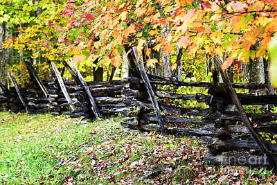 Rail Fence Fall Color Poster by Thomas R Fletcher