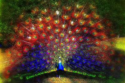 Poster featuring the photograph Rainbow Peacock by Jodie Marie Anne Richardson Traugott          aka jm-ART