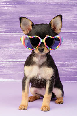 Rainbow Sunglasses Poster by Greg Cuddiford