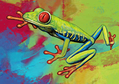 Rainforest Frog Stylised Pop Art Drawing Portrait Poster Poster by Kim Wang