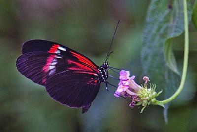 Reaching For Nectar Poster by Maj Seda