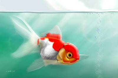 Red Cap Goldfish Poster
