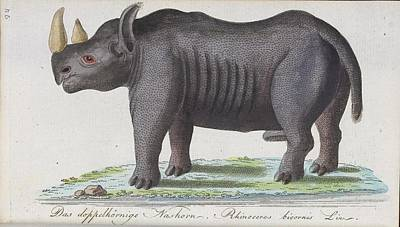 Rhinoceros Poster by Celestial Images
