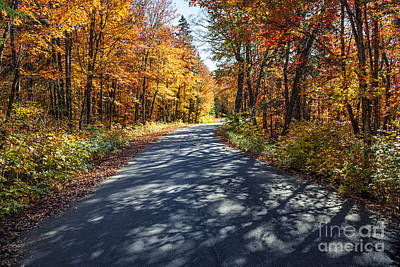 Road In Fall Forest Poster