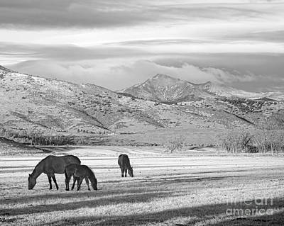Rocky Mountain Colorado Country Morning Bw Poster
