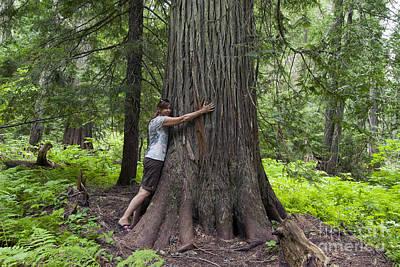 Roosevelt Grove Of Ancient Cedars, Idaho Poster