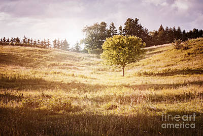 Rural Landscape With Single Tree Poster