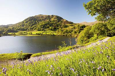 Rydal Water In Spring Poster by Ashley Cooper