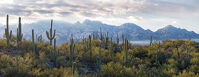 Saguaro Cactus With Mountain Range Poster by Panoramic Images