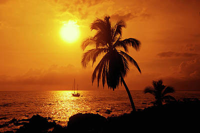 Sailboat And Palm Tree At Sunset Poster