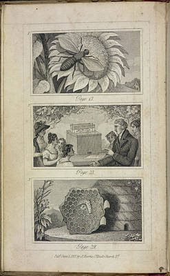Scenes Of Industry Displayed In The Bee-h Poster