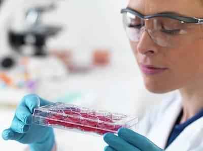 Scientist Holding Stem Cells Poster by Tek Image