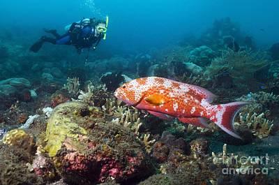 Scuba Diving, Bali Poster by Georgette Douwma