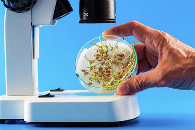 Seeds In Petri Dish Poster