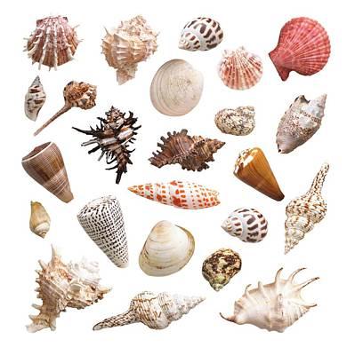 Selection Of Sea Shells Poster