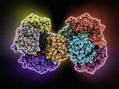 Serotonin N-acetyltransferase Complex Poster by Science Photo Library
