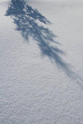 Shadow Of A Fir Tree Falls Poster by Anna Watson