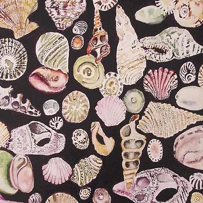 Shells By C . 1.3 Poster by Cheryl Miller