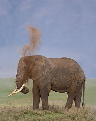 Side Profile Of An African Elephant Poster