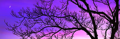 Silhouette Of A Tree At Dusk Poster