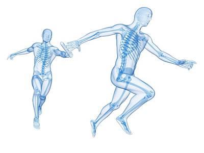 Skeletal System Of Runners Poster by Sebastian Kaulitzki