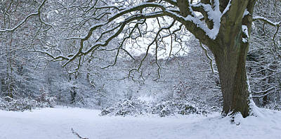 Snow Covered Trees In A Park, Hampstead Poster