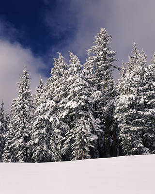 Snow Covered Western Hemlock And Fir Poster by Panoramic Images